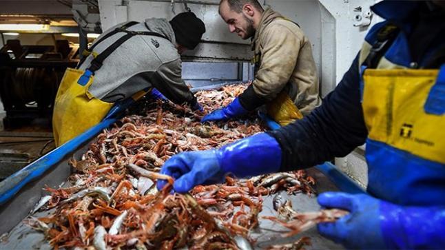 بريطانيا تندد بممارسات الاتحاد الأوروبي ضد بعض أنواع مأكولاتها البحرية